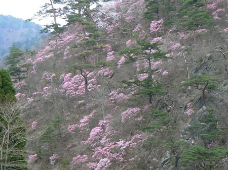 2008_4_13_miwasaisonatsuigawa_022