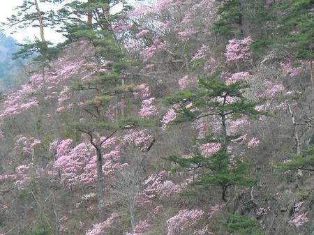 2008_4_13_miwasaisonatsuigawa_024