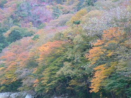 2008_11_14_iwaki_001