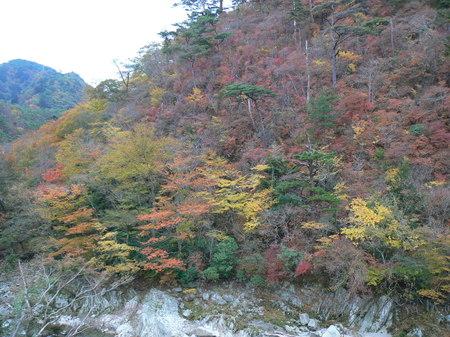 2008_11_14_iwaki_005